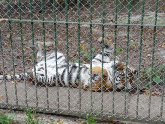 La Gradina Zoo