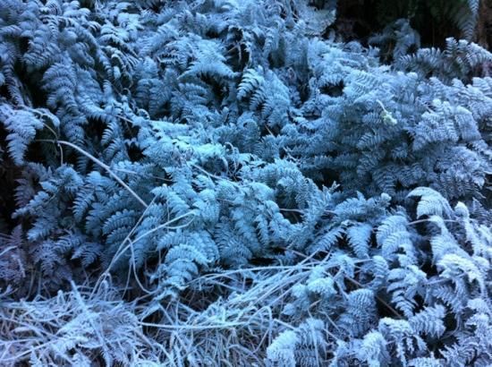 Ridgeline Adventures: frozen foliage on our trip 