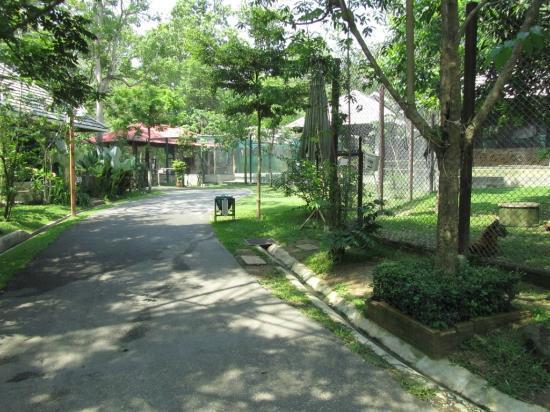 Tiger Kingdom Chiang Mai: Tiger Kongdom