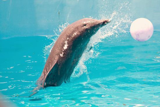Clearwater Marine Aquarium: Nicholas playing
