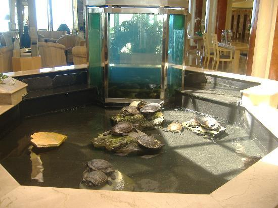 IFA Dunamar Hotel: turtles in the lobby