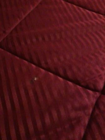 Red Lion Inn and Suites Auburn: Crusty item stuck to bedspread