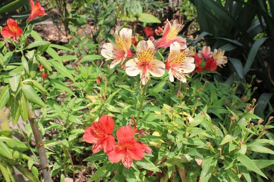 La Posada del Quinde: gardens
