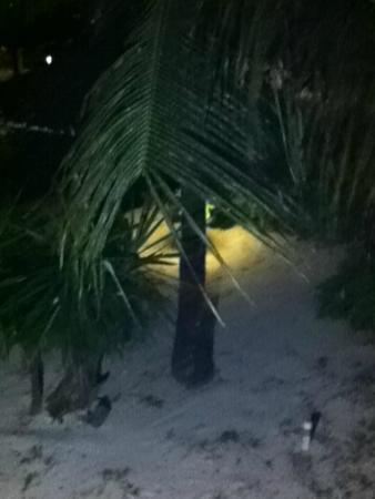 Barrymore Beach Club: Palm tree right outside our room