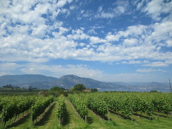 Red Rooster Winery: View from the winery