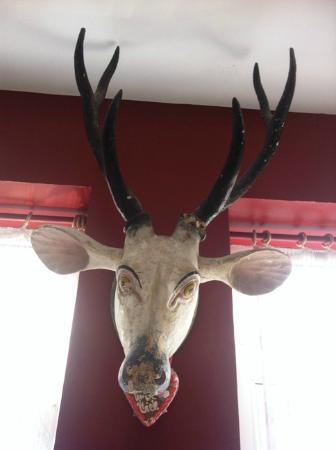 Portus House: Portus Mascot