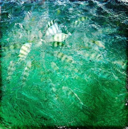 Al Hamra: Sea