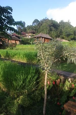 Puri Lumbung Cottages: Cottages