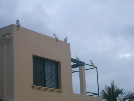 Mediterranean Resorts : Noisy cockatoos - view from balcony
