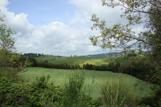 Agriturismo Poggiacolle: A view from the rooms of the Tuscan countryside