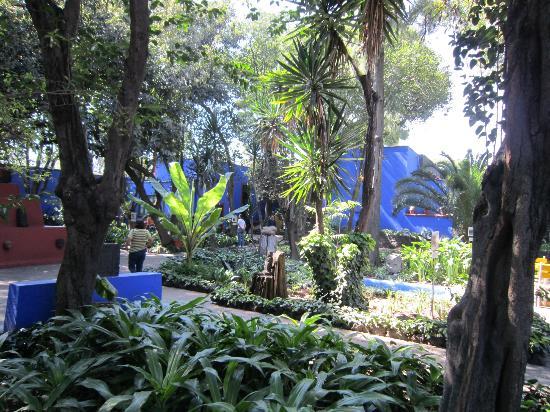 Musée Frida Kahlo : jardin