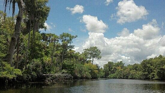 Hobe Sound, FL: View while canoeing down Loxahatchee River