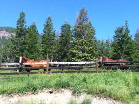 Silverspring Ranch: horses at the ranch