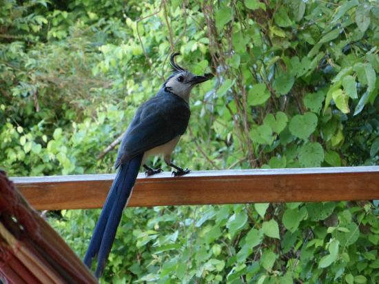 Anamaya Resort & Retreat Center: visitor to my private deck