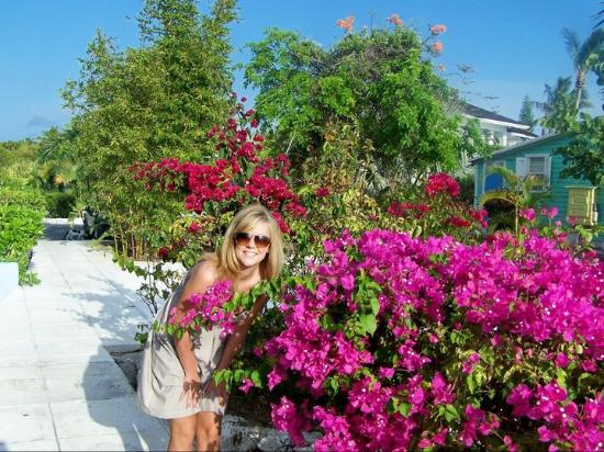 Romora Bay Resort & Marina: Beautiful flowers lining walkways