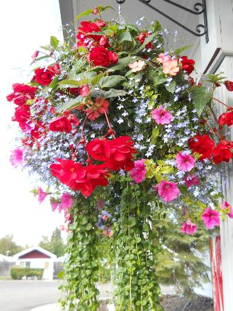 River's Edge RV Park & Campground: hanging basket