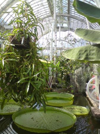 Horticultural Gardens (Tradgardsforeningen) : Inne i Palmhuset