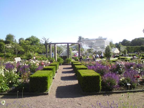 Horticultural Gardens (Tradgardsforeningen) : Rosovallen