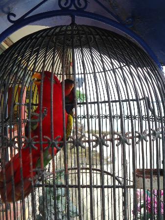 Red Parrot Inn: Red parrots
