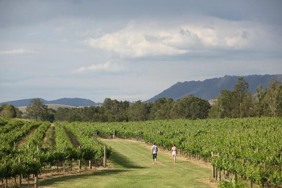 Wyndham Estate: A view of our vineyards