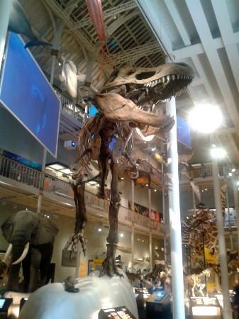 Museo Nacional de Escocia: Dinosaur Exhibit