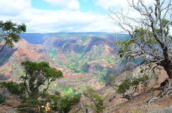 Kokee Lodge Restaurant: The Waimea Canyon
