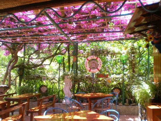 Oasi la Vigna B&B Restaurant : splendida bouganville glabra