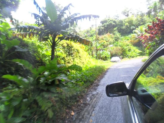 Antours Dominica: Driving through the Island