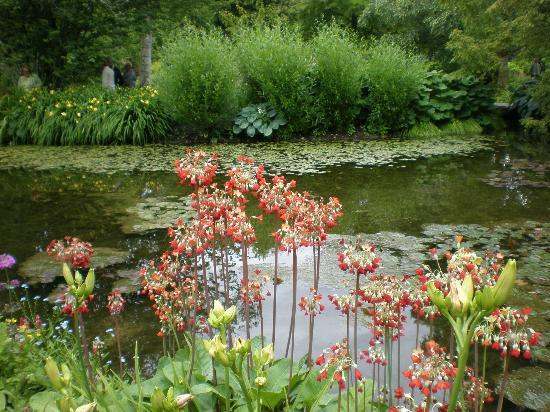 Longstock Water Gardens: Longstock