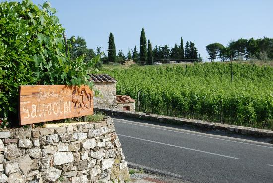 Hotel Colle Etrusco Salivolpi: Entry with vineyard across the road