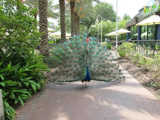 Audubon Zoo: very beautiful!