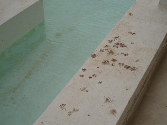 Radisson Blu Palace Resort & Thalasso, Djerba: bords de la piscine recouvert de crottes d'oiseaux
