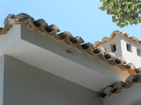 Lizard in Assos Picture of San Giorgio Skala TripAdvisor
