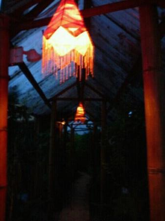 Jacaranda Hotel and Jungle Garden: night
