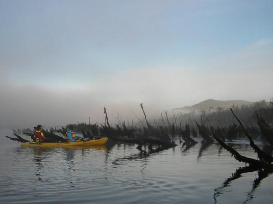 Chepu Adventures: Kayak at dawn - sunken logs