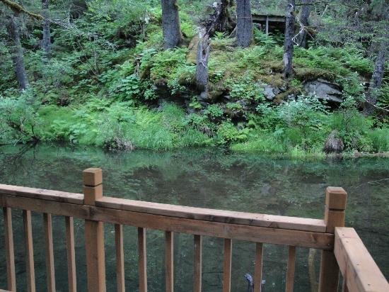 Alaska Creekside Cabins: View from cabin