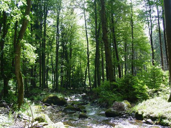 Waldhotel Am Ilsestein: Waldreiche Umgebung