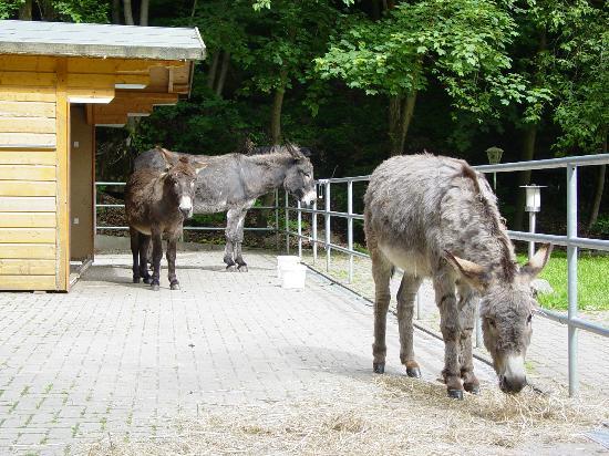 Waldhotel Am Ilsestein: Eselgehege