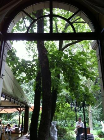 St. Antonio: view from inside looking out onto garden.