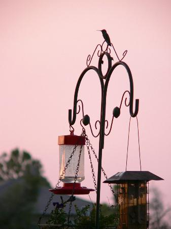 Whispering Pines Bed and Breakfast: Excellent Bird Watching