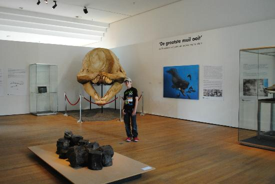 Natural History Museum : Leviathon skull discovered in the Peruvian desert