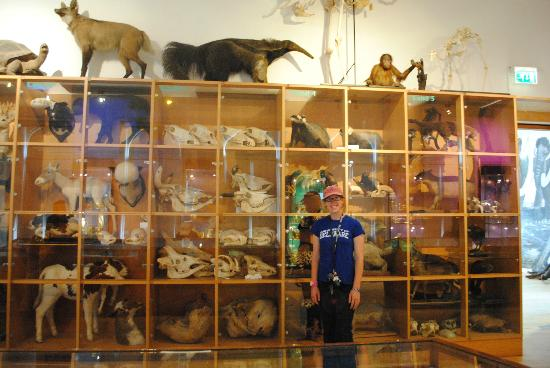 Natural History Museum : The taxidermy room
