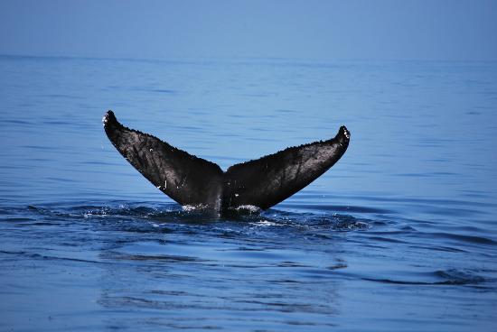 Kaulana Pali Kai: Whale Watching photo from Jan