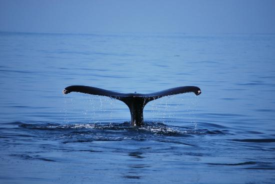 Kaulana Pali Kai: Kohola Whale Watching