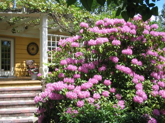 The Stella Rose B&B: a view onto the deck from the lawn