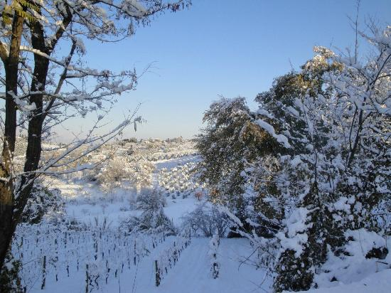 Borgo Tollena: le vigne e la neve