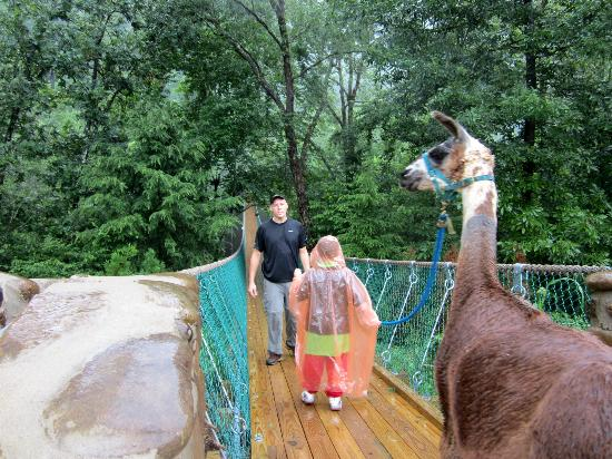 Smoky Mountain Llama Treks - Day Tours: Our first bridge with the Llama's
