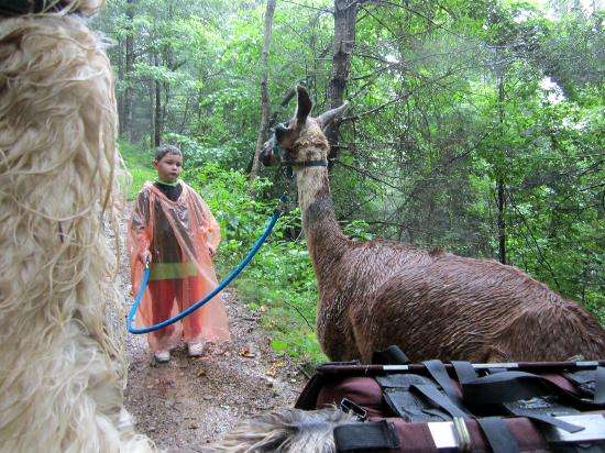 Smoky Mountain Llama Treks - Day Tours: Reese with Talley