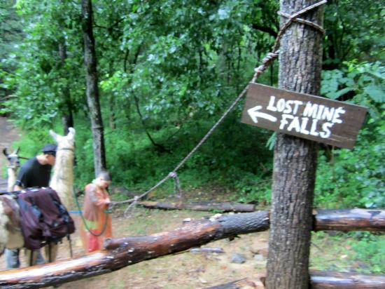 Smoky Mountain Llama Treks - Day Tours: Trail to the waterfall
