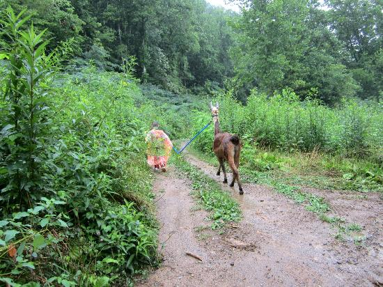 Smoky Mountain Llama Treks - Day Tours: Reese way ahead of us.